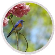 Bluebird In Cherry Tree Round Beach Towel