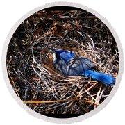 Bluebird In Her Nest Round Beach Towel by Susanne Still