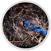 Round Beach Towel featuring the photograph Bluebird In Her Nest by Susanne Still