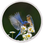 Round Beach Towel featuring the photograph Bluebirds Picnicking In The Daisies by Randall Branham