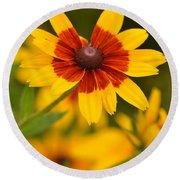 Round Beach Towel featuring the photograph Blush-eyed Susan by JD Grimes