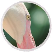 Round Beach Towel featuring the photograph Blushing Flamingo by Nola Lee Kelsey