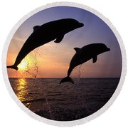 Bottlenose Dolphins Round Beach Towel
