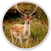 Wildlife Fallow Deer Stag Round Beach Towel by Linsey Williams