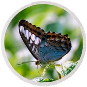 Round Beach Towel featuring the photograph Bright Blue Butterfly by Peggy Franz