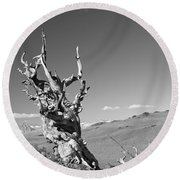 Bristlecone Pine And Cloud Round Beach Towel
