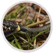 British Grass Snake Round Beach Towel