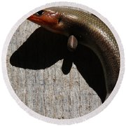 Broad-headed Skink On Barn  Round Beach Towel