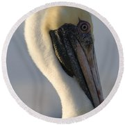 Brown Pelican Profile Round Beach Towel