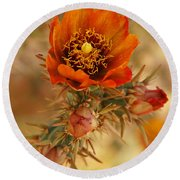 Buckhorn Cholla 2 Round Beach Towel by Vivian Christopher