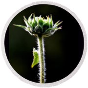 Round Beach Towel featuring the photograph Budding Mountain Sunflower by Susanne Still