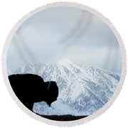 Round Beach Towel featuring the photograph Buffalo Suvived Another Yellowstone Winter by Dan Friend