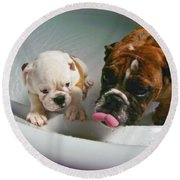 Bulldog Bath Time II Round Beach Towel by Jeanette C Landstrom