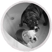 Round Beach Towel featuring the photograph Bulldog Bath Time by Jeanette C Landstrom