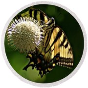 Butterfly 2 Round Beach Towel by Joe Faherty