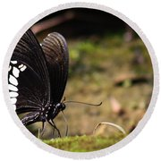 Round Beach Towel featuring the photograph Butterfly Feeding  by Ramabhadran Thirupattur
