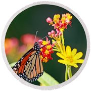 Butterfly Monarch On Lantana Flower Round Beach Towel