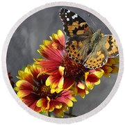 Round Beach Towel featuring the photograph Butterfly On A Gaillardia by Verana Stark