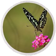 Round Beach Towel featuring the digital art Butterfly On Pink Flower  by Ramabhadran Thirupattur