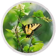 Round Beach Towel featuring the photograph Butterfly Tiger Swallow by Peggy Franz