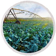 Cabbage Growth Round Beach Towel by Carlos Caetano