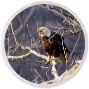 Round Beach Towel featuring the photograph Calling For His Mate by Randall Branham