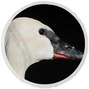 Round Beach Towel featuring the photograph Trumpeter Swan by Maciek Froncisz
