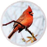 Cardinal 1 Round Beach Towel by Joe Faherty