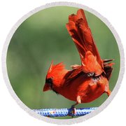 Cardinal-a Picture Is Worth A Thousand Words Round Beach Towel