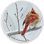Cardinal I The Snow  Round Beach Towel