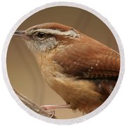 Carolina Wren Round Beach Towel by Daniel Reed