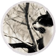 Cat In A Tree In Black And White Round Beach Towel