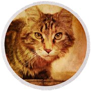 Cat Looking Sinister Round Beach Towel