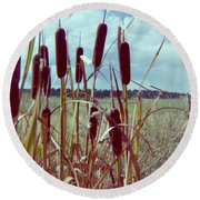 Round Beach Towel featuring the photograph Cat Tails by Bonfire Photography
