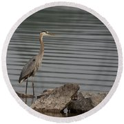 Round Beach Towel featuring the photograph Cautious by Eunice Gibb
