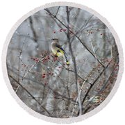 Cedar Wax Wing 3 Round Beach Towel