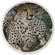 Cheetah Alert Round Beach Towel