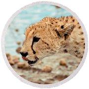 Cheetah Headshot Round Beach Towel by Darcy Michaelchuk