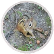 Chipmunk Feast Round Beach Towel