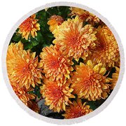 Chrysanthemums Round Beach Towel by Kay Novy