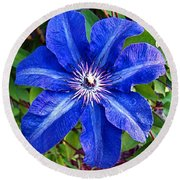 Round Beach Towel featuring the photograph Clematis by Nick Kloepping