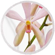 Closeup Pink Orchid Round Beach Towel by Atiketta Sangasaeng
