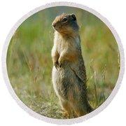 Columbian Ground Squirrel Spermophilus Round Beach Towel