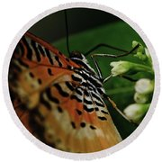 Common Lacewing Round Beach Towel