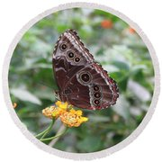 Costa Rica Butterfly Round Beach Towel