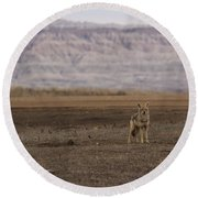 Coyote Badlands National Park Round Beach Towel