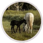 Cracker Foal And Mare Round Beach Towel by Lynn Palmer