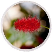 Round Beach Towel featuring the photograph Crimson Bottle Brush by Tikvah's Hope