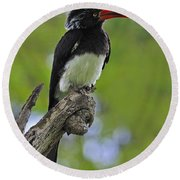 Crowned Hornbill Round Beach Towel by Tony Beck