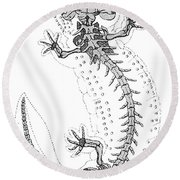 Cryptobranchus, Living Fossil Round Beach Towel by Science Source
